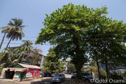 私が住んでいる U Wisara Einya のアパート。左下がいつも買い物をしている雑貨屋