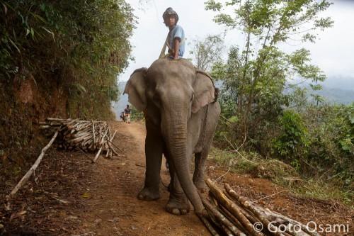 象も象使いも悠然としている
