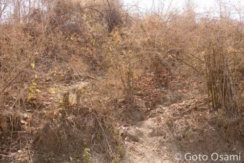 日本兵はバゴー山地のこのあたりで亡くなった