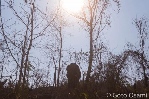バゴー山地のゾウ