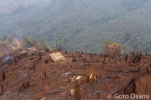 焼き終えたばかりの焼き畑
